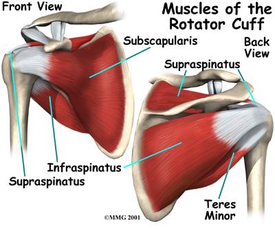 rotator cuff SITS muscles